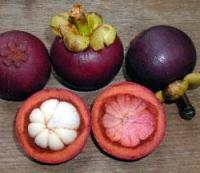 МАНГОСТИН - азиатская Королева фруктов (долгое укоренение)