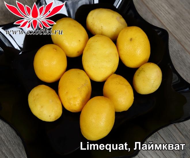 limequat, лаймкват