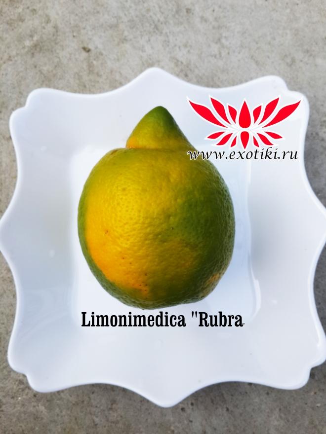 Limonimedica