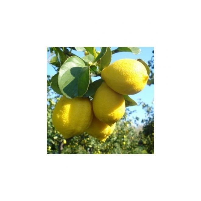 C. Limon Zagara Bianca