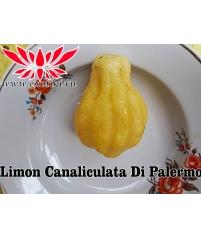 Limon Canaliculata Di Palermo, Лимон