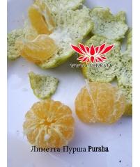 Лиметта Пурша (Pursha