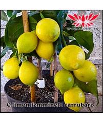 "Лимон ""Femminello Carrubaro"""