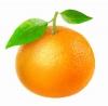 апельсин Слава Мичурина
