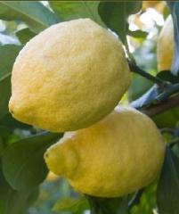 Лимон Antico Di Rocca Imperiale