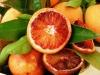 """Citrus sinensis Moro, апельсин"""