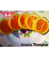 Thompson orange Апельсин