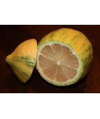 """Лимон """"Эврика""""   C. limon """"Eureka"""""""