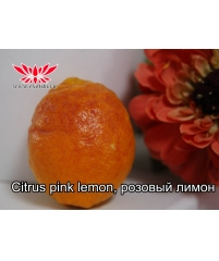 Citrus pink lemon, розовый лемон ( просто идеал))