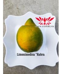 "Limonimedica ""Rubra"""