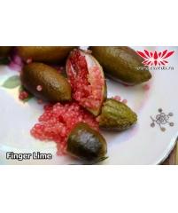 Finger lime, микроцитрус