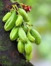 Билимби- Огуречное дерево