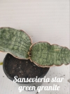 Sansevieria star green granite