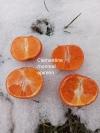 Clementine Monreal apireno (оболденно сладкий)