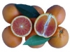 Arancio Tarocco Dal Muso (Citrus sinensis)
